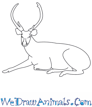 How to Draw a Sambar in 8 Easy Steps