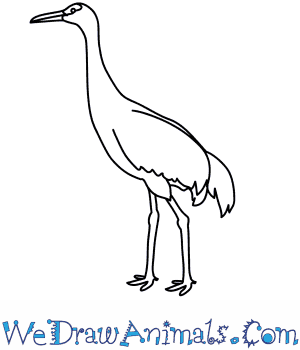 How to Draw a Sandhill Crane in 7 Easy Steps