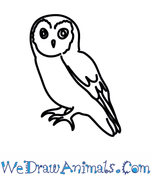 How to Draw a Scops Owl in 7 Easy Steps