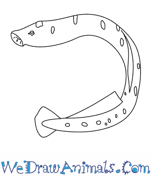How to Draw a Sea Lamprey in 6 Easy Steps