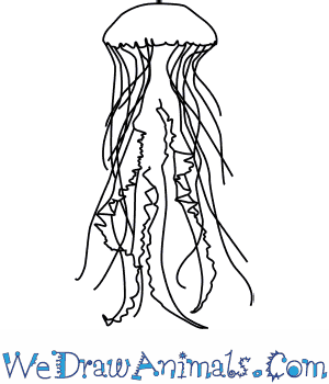 How to Draw a Sea Nettle in 4 Easy Steps