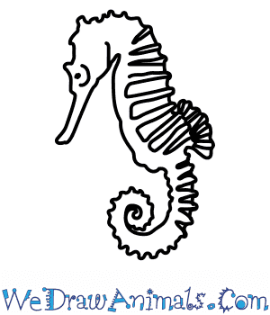 How to Draw a Seahorse in 6 Easy Steps
