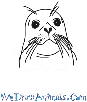 How to Draw a Seal Head in 7 Easy Steps