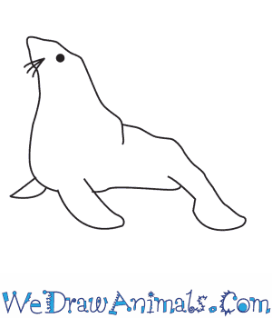 How to Draw a Seal in 6 Easy Steps