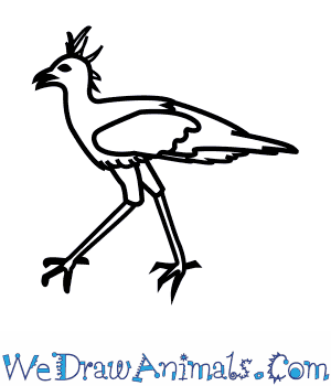 How to Draw a Secretary Bird in 7 Easy Steps