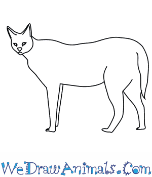 How to Draw a Serval in 8 Easy Steps