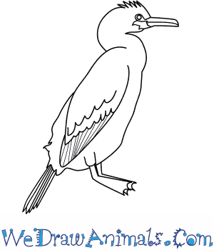 How to Draw a Shag in 8 Easy Steps