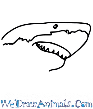 How to Draw a Shark Face in 5 Easy Steps