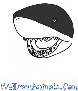 How to Draw a Shark Head in 6 Easy Steps