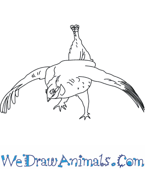 How to Draw a Sharp Tailed Grouse in 6 Easy Steps
