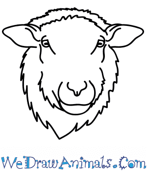 How to Draw a Sheep Face in 5 Easy Steps
