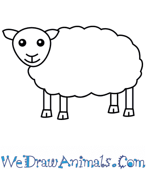 How to Draw a Sheep For Kids in 6 Easy Steps