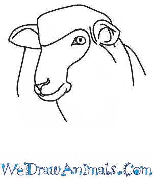 How to Draw a Sheep Head in 7 Easy Steps