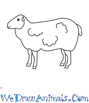 How to Draw a Sheep in 9 Easy Steps