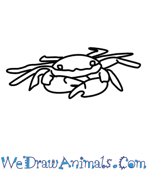 How to Draw a Shore Crab in 7 Easy Steps