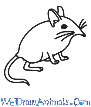 How to Draw a Shrew in 6 Easy Steps