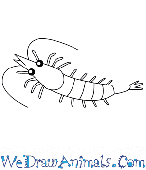 How to Draw a Shrimp For Kids in 6 Easy Steps