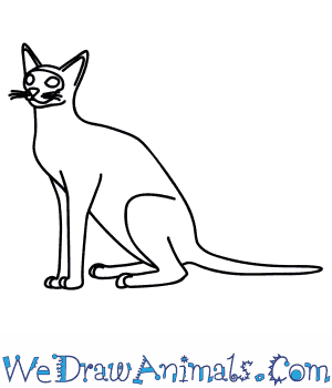 How to Draw a Siamese Cat in 9 Easy Steps