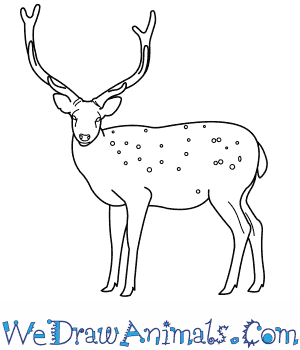 How to Draw a Sika Deer in 9 Easy Steps