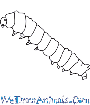 How To Draw A Silkworm