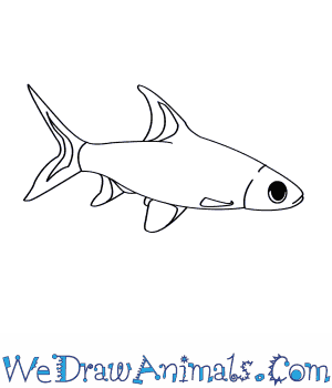 How to Draw a Silver Shark in 7 Easy Steps