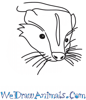 How to Draw a Skunk Head in 7 Easy Steps