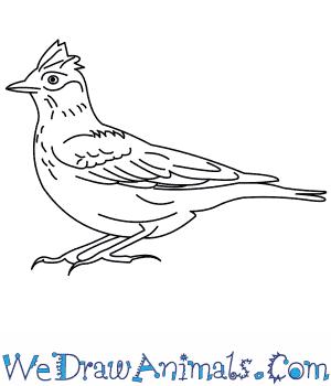 How to Draw a Skylark in 9 Easy Steps