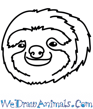 How to Draw a Sloth Face in 5 Easy Steps