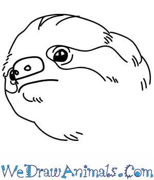 How to Draw a Sloth Head in 8 Easy Steps