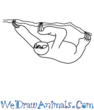 How to Draw a Sloth in 8 Easy Steps