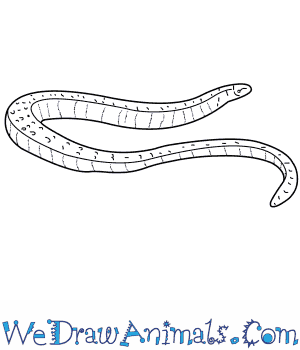 How to Draw a Slow Worm in 5 Easy Steps