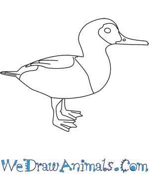 How to Draw a Smew in 7 Easy Steps