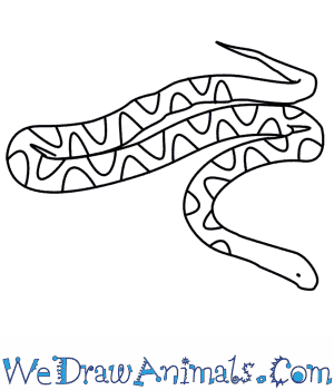 How to Draw a Snake in 7 Easy Steps