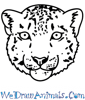 How to Draw a Snow Leopard Face in 6 Easy Steps
