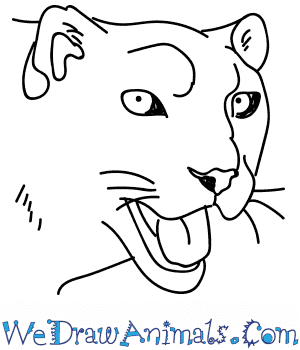 How to Draw a Snow Leopard Head in 10 Easy Steps