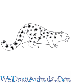 How to Draw a Snow Leopard in 11 Easy Steps