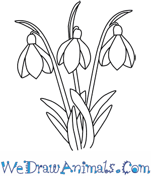 How to Draw a Snowdrop Flower in 4 Easy Steps