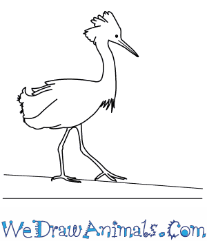 How to Draw a Snowy Egret in 9 Easy Steps