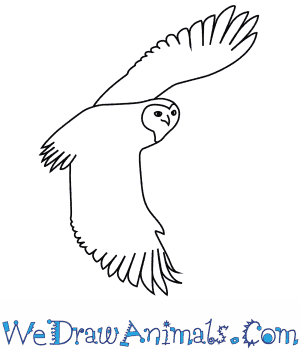 How to Draw a Snowy Owl in 5 Easy Steps
