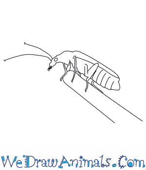 How to Draw a Soldier Beetle in 7 Easy Steps