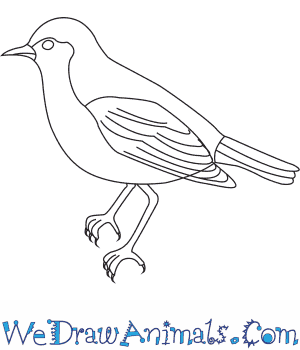 How to Draw a Song Thrush in 7 Easy Steps