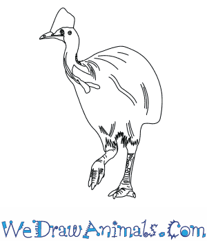 How to Draw a Southern Cassowary in 6 Easy Steps