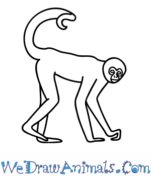 How to Draw a Spider Monkey in 8 Easy Steps