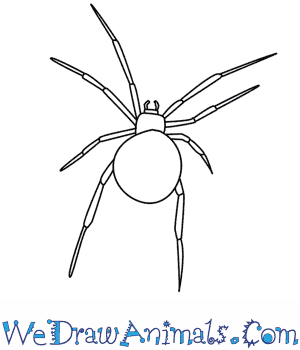How to Draw a Spider in 10 Easy Steps