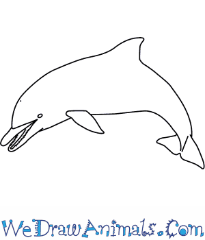 How To Draw A Spinner Dolphin