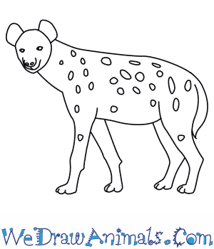 How to Draw a Spotted Hyena in 9 Easy Steps