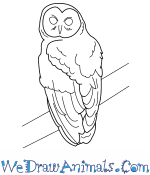 How to Draw a Spotted Owl in 8 Easy Steps