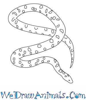 How to Draw a Spotted Python in 5 Easy Steps