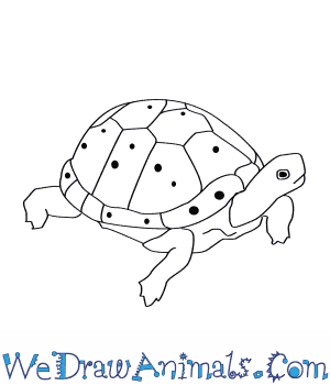 How to Draw a Spotted Turtle in 8 Easy Steps