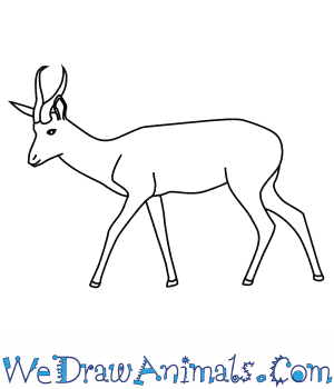 How to Draw a Springbok in 7 Easy Steps
